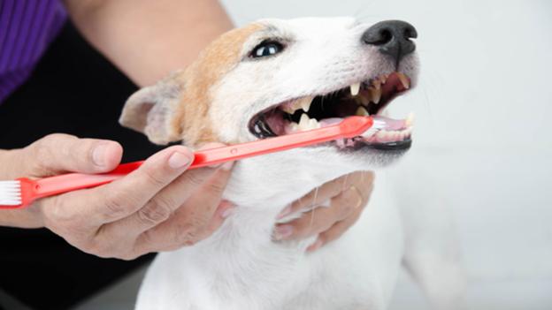 dog dental hygiene tips from shannon animal hospital in midland texas